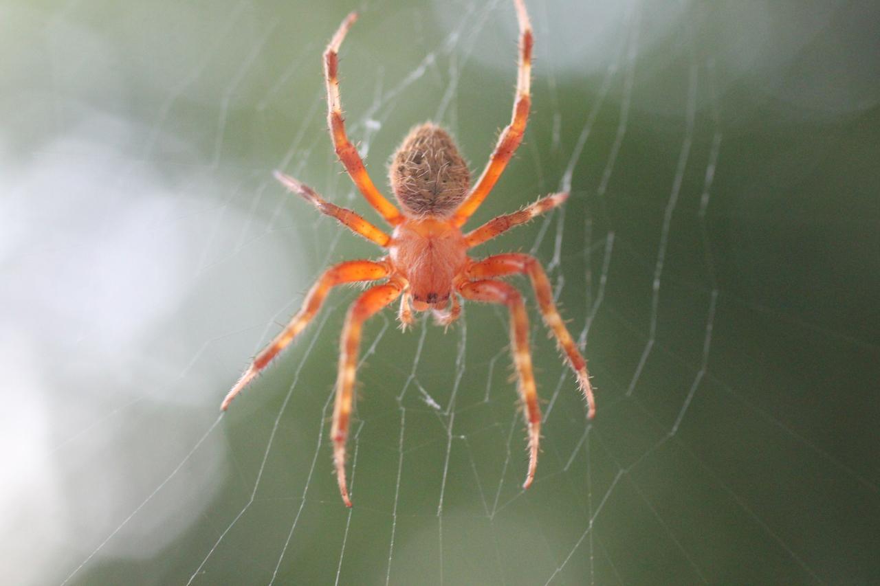 Digital Photography Barn Spider